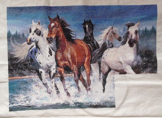 wild-horses-16.jpg