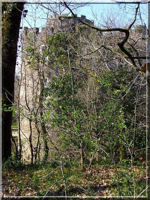 Diantre !... La végétation protège le château