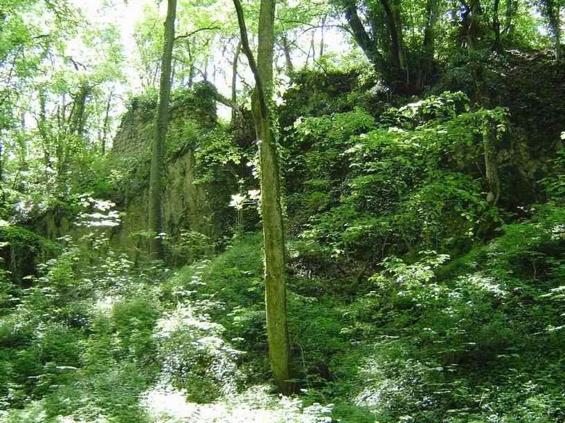 La dense forêt camouffle merveilleusement la ruine.