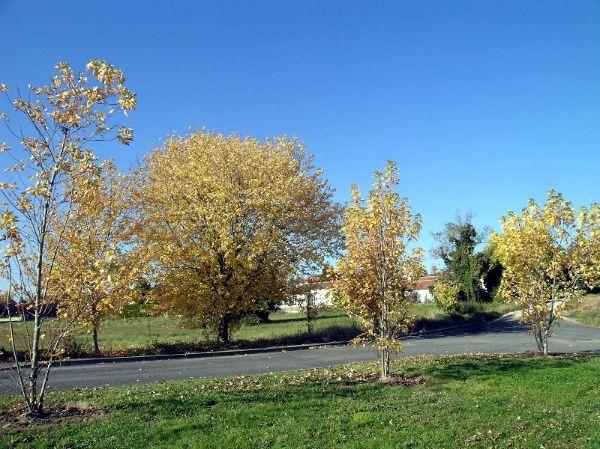 Promenade en pays Mirebalais, Val de Clain et Forêt de moulière le lundi 5 Novembre 2007