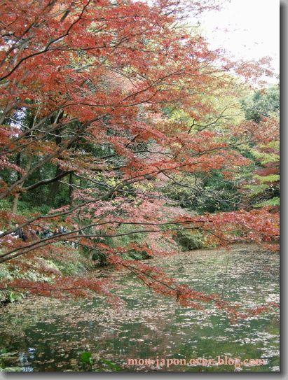 Rikugien-automne-9