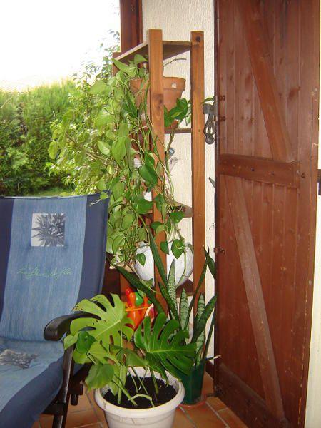Jardin d 39 int rieur l 39 univers de celtikalia for Bouture yucca exterieur