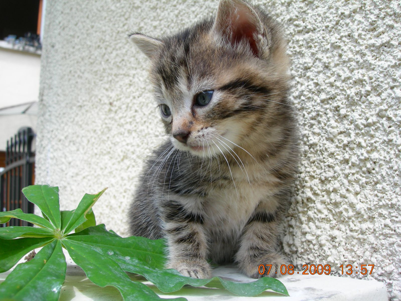 Aurillac Chatons A Donner Informations