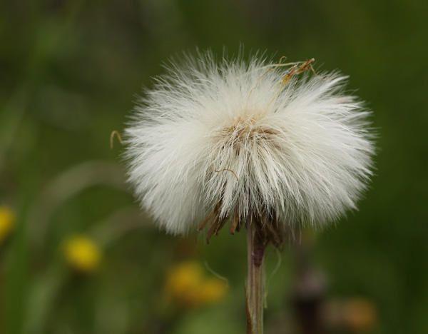 Fleurs et Plantes de la région