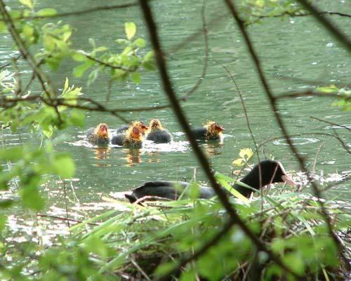 <p>Quelques photos d'animaux de la région : étangs de Bailleul sur Thérain</p>