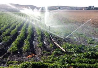 Algerie Agriculture Irrigation