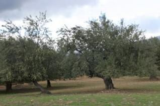 Tipaza agriculture