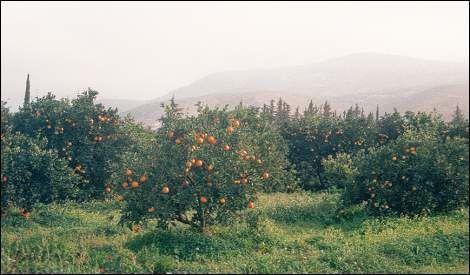 oranges-et-des-clementines.jpg