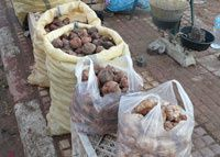 truffes-sud-algerien-copie-1.jpg