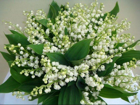 http://idata.over-blog.com/0/25/97/94/divers/Nature/muguet.jpg