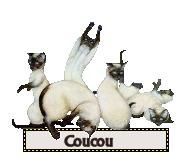 coucou-chat.jpg