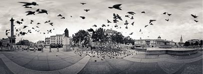 The birds of Trafalgar Square (cliquez pour un zoom)