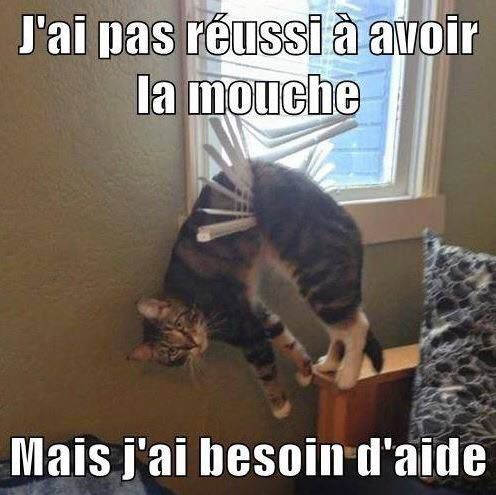 Amies-Betes-7-Mouche-chat