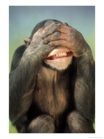 3Chimpanzee-Covering-His-Eyes