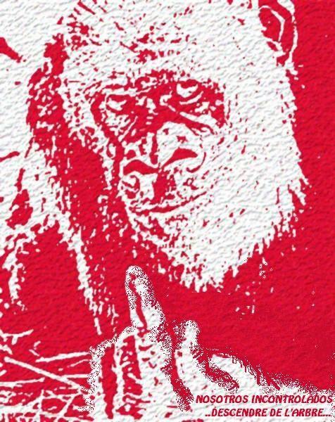 bonobo.incontrolado