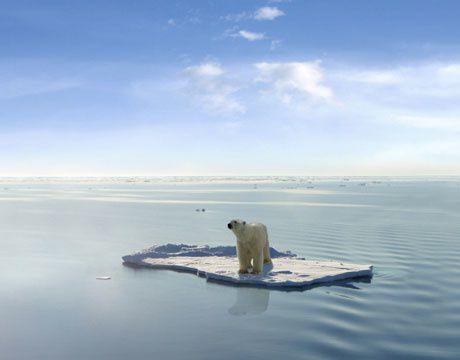 polar-bear-hog-lg.jpg