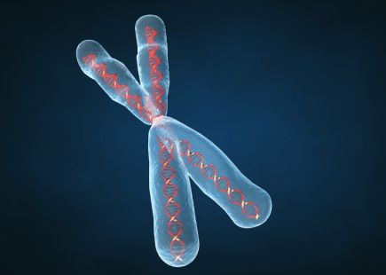 227_genetique_chromosome.jpg
