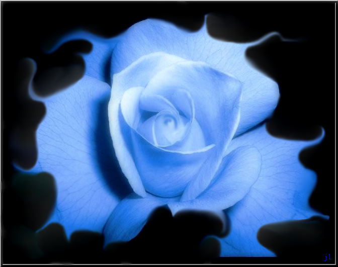 Rose-bleutee-TOP-1a.png