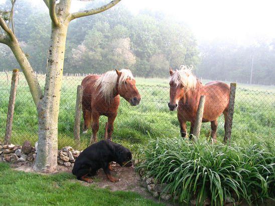 les-chevaux-2--14--copie-1.jpg