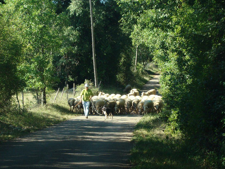 route campagne bergere moutons lot