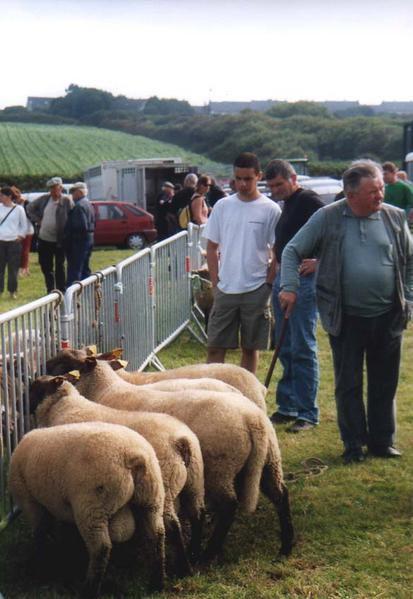 foire-au-mouton-25.jpg