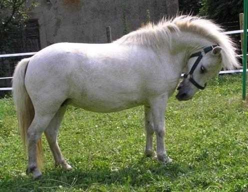 poney a adopter gratuitement