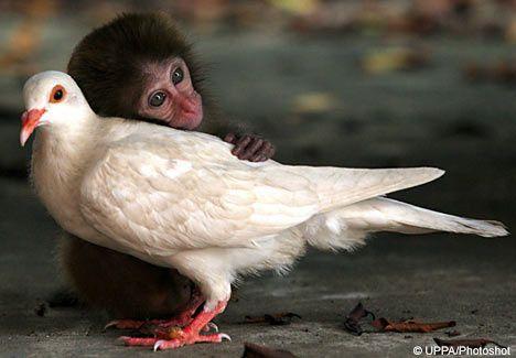 monkeypigeon.jpg