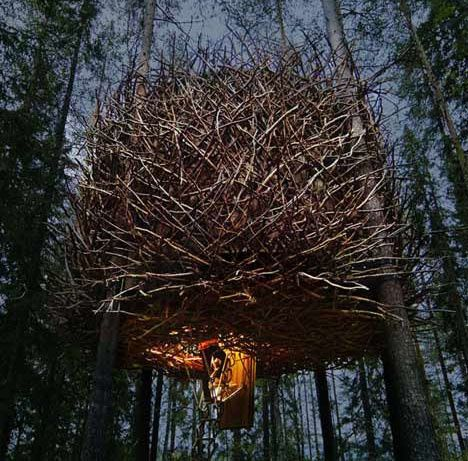 tree-hotel-birds-nest.jpg