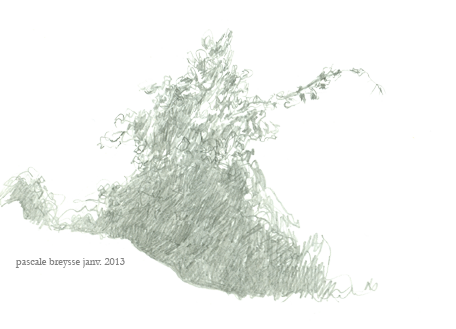 feuillage-png.png