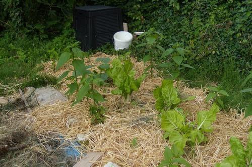 Ma recette de lasagnes un monde dans mon jardin - Bettes au jardin ...