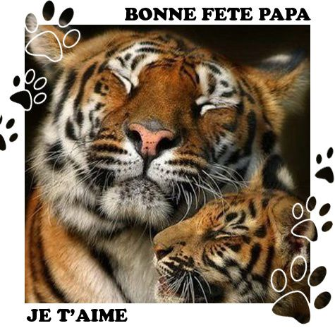fete-pere-amour-animaux.jpg