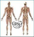 Soutien à l'ostéopathie