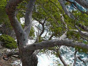 arbres-et-mer.jpg