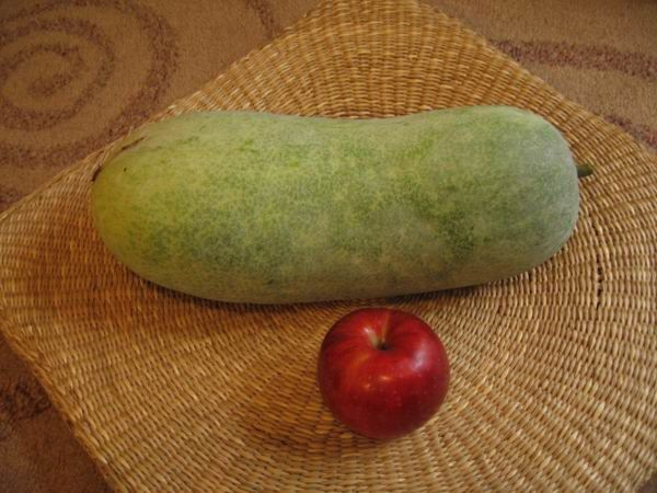 courge-entiere-1.JPG