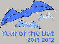 year-of-the-bat