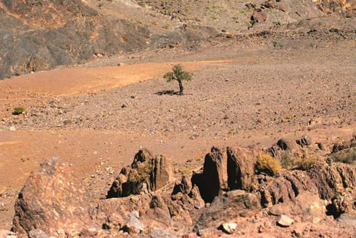 Desertification-arbre-survi.jpg