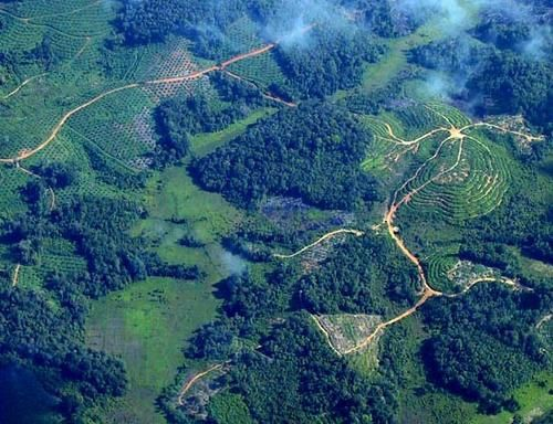 indonesia-deforestation-1.jpg