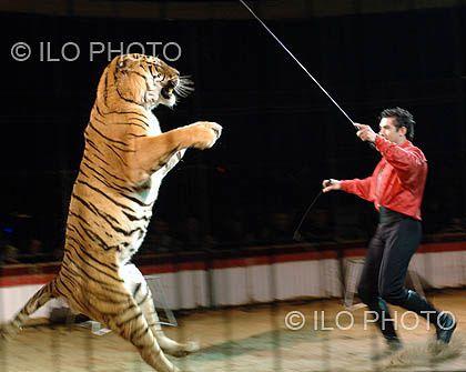 dompteur-de-tigre.jpg