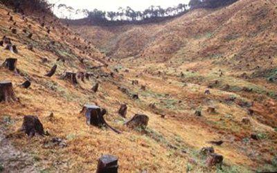 la-deforestation-illegale-2670751.jpg