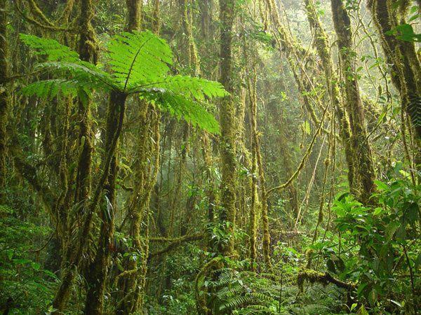 la-foret-tropicale.jpg