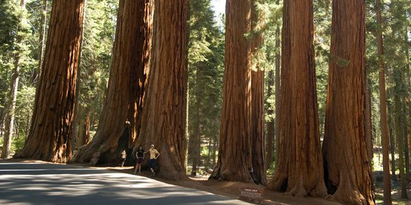 sequoiaForet.jpg