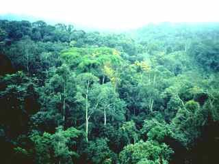 rainforest_Congo_FAO.jpg