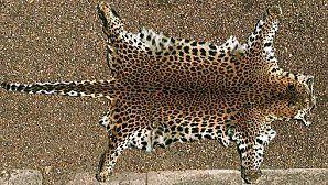 peau-leopard.jpg