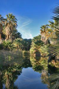 desert-oasis-water-pool-v.jpg
