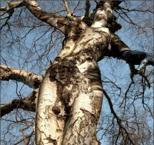 Funny-trees-from-all-around-the-world.jpg