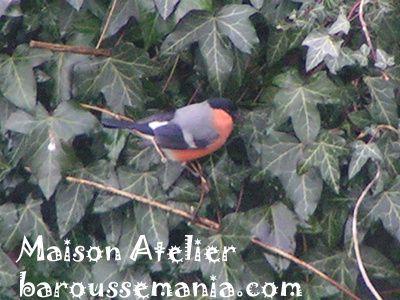 pivoine_baroussemania_oiseau.jpg