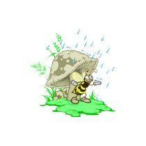 abeille pluie