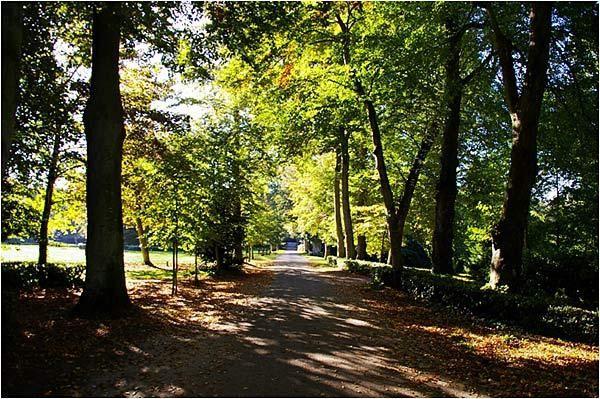 quelques images d'une promenade dans le parc sous un beau soleil de novembre