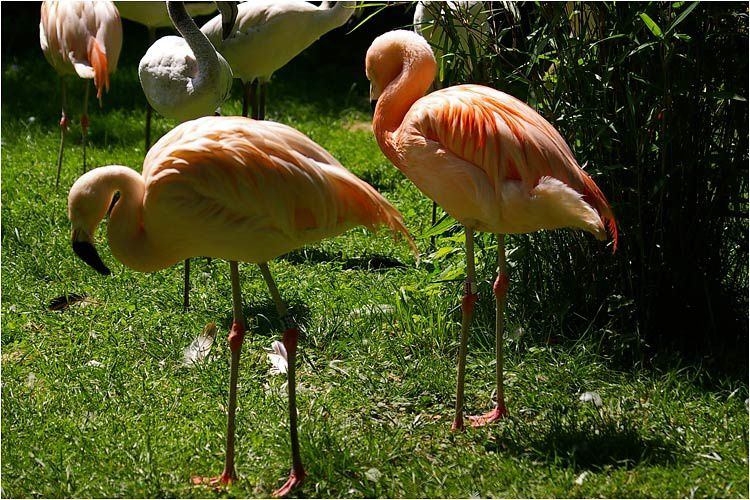 Visite au château de la Bourbansais et son parc zoologique.