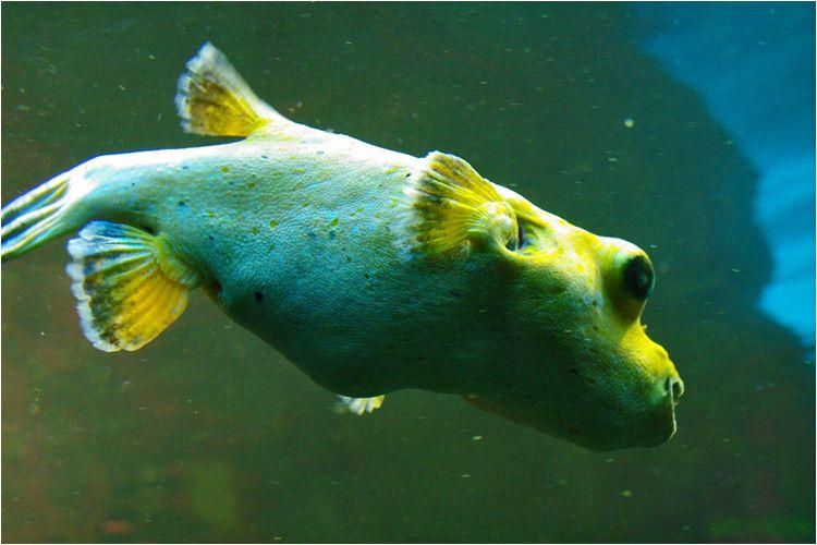 visite en images de l'aquarium de saint malo qui vient d'accueillir son 5.000.000eme visiteur depuis son ouverture.